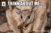 black-footed-rock-wallaby-meme