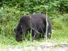 BEAR BEAR BEAR!!!!