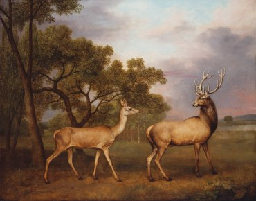 A Red Deer Buck and a Doe, 1792, Stubbs