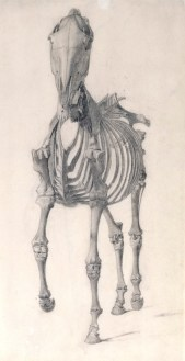 Finished study for 'The Second Anatomical Table of the Skeleton of the Horse', 1756-58, Stubbs